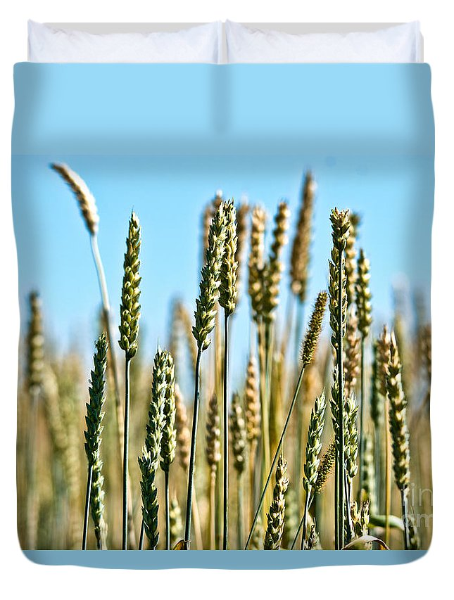 Wheat Duvet Cover featuring the photograph Gold Harvest Blue Sky by Cheryl Baxter
