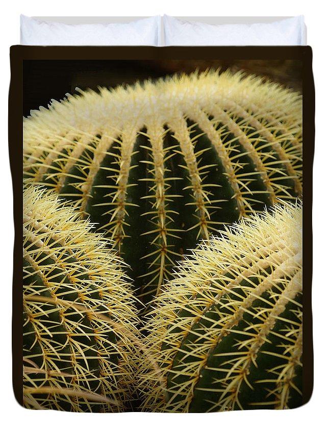 Prott Duvet Cover featuring the photograph golden barrel cactus Mexico by Rudi Prott