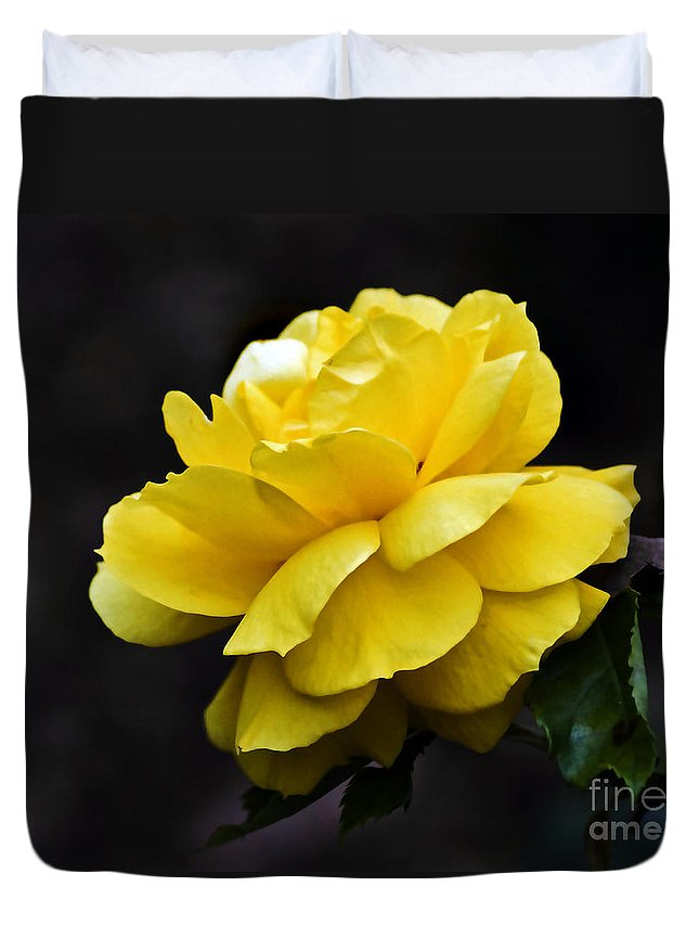 Rose Duvet Cover featuring the photograph Golden Beauty by Ursula Gill