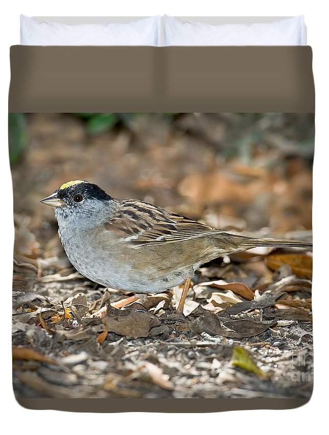 Fauna Duvet Cover featuring the photograph Golden-crowned Sparrow by Anthony Mercieca
