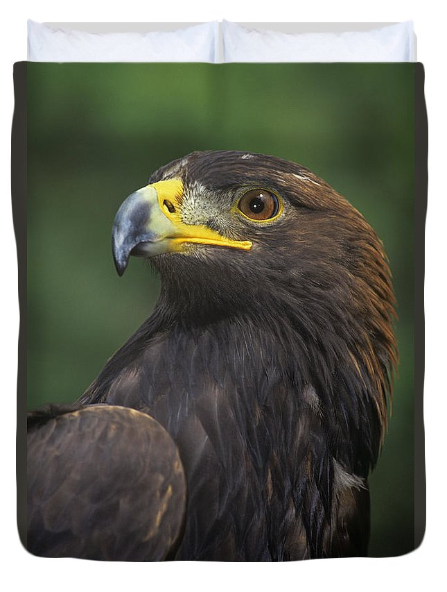 Golden Eagle Duvet Cover featuring the photograph Golden Eagle Portrait Threatened Species Wildlife Rescue by Dave Welling