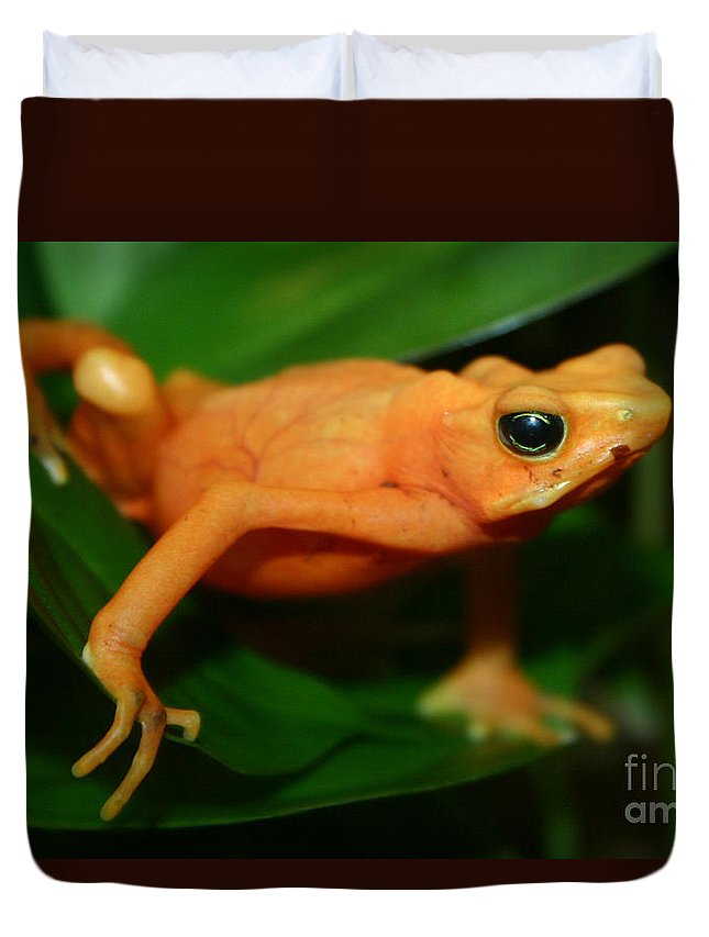 Alyce Taylor Duvet Cover featuring the photograph Golden Mantella by Alyce Taylor