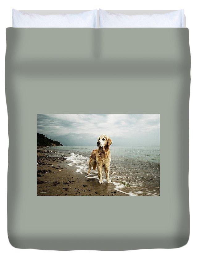Pets Duvet Cover featuring the photograph Golden Retriever On Beach by Jutta Bauer