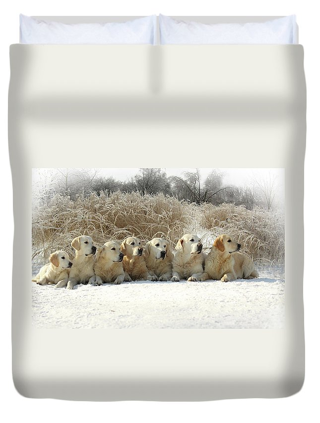 Pets Duvet Cover featuring the photograph Golden Retrievers by Sergey Ryumin