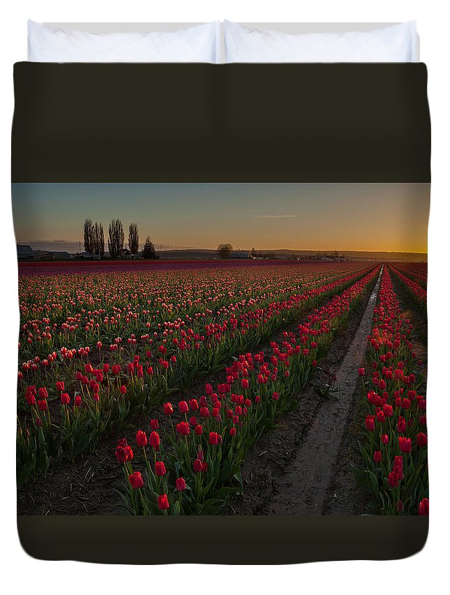 Skagit Tulip Festival Duvet Cover featuring the photograph Golden Skagit Tulip Fields by Mike Reid