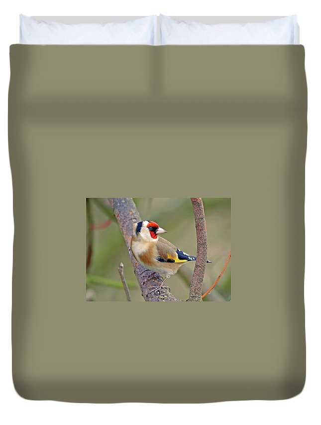 Animal Themes Duvet Cover featuring the photograph Goldfinch by Kevspix
