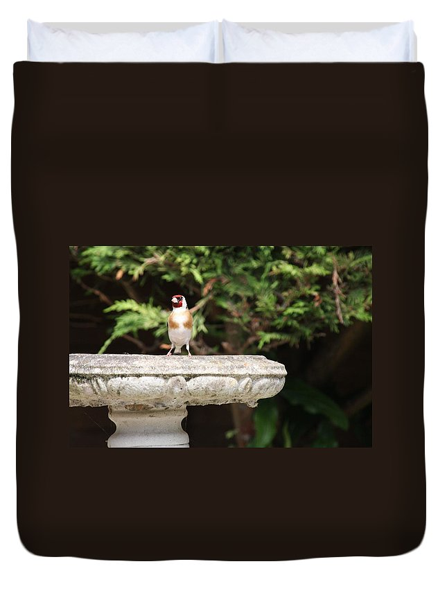 Goldfinch On Birdbath Duvet Cover featuring the photograph Goldfinch On Birdbath by Gordon Auld