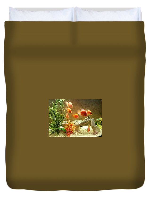 Fish. Goldfish Duvet Cover featuring the photograph Goldfish At The Chinese Restaurant by Lois Ivancin Tavaf