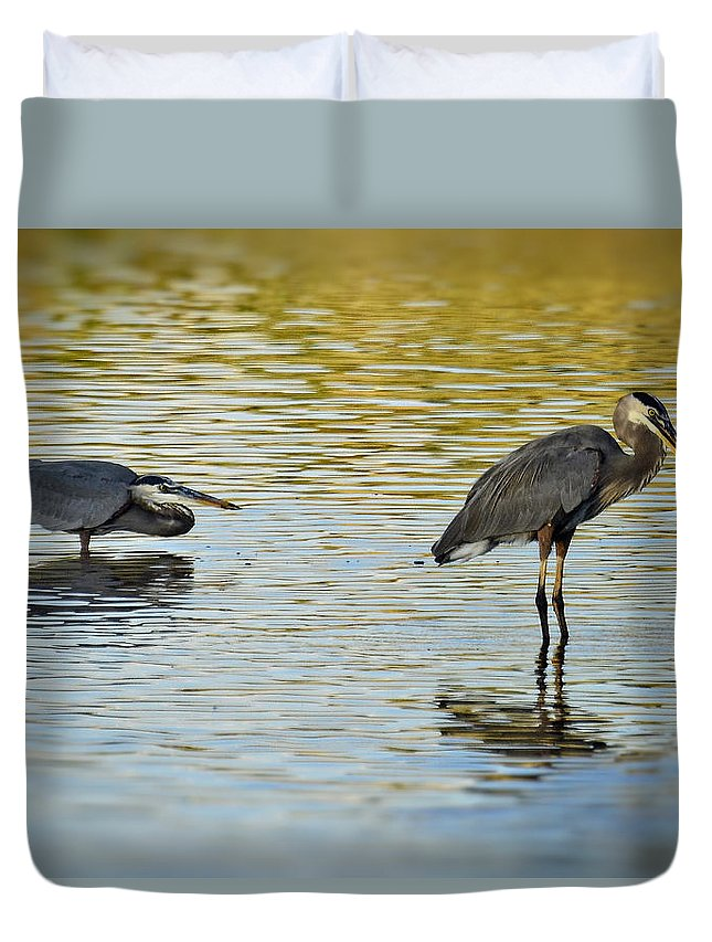 Great Blue Heron Duvet Cover featuring the photograph Gone Fishin' by Saija Lehtonen