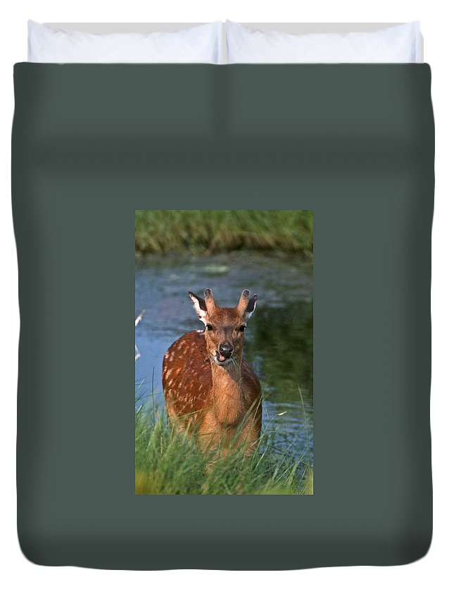 Buck Duvet Cover featuring the photograph Good Grass by Skip Willits