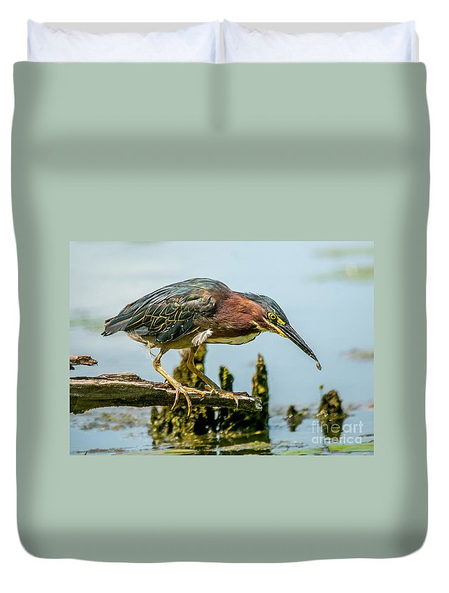 Green Feathers Duvet Cover featuring the photograph Good Green Fisher by Cheryl Baxter