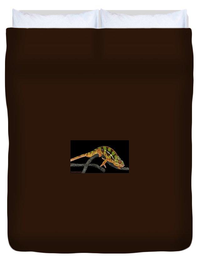 Usa Duvet Cover featuring the photograph Good Night Chameleon by LeeAnn McLaneGoetz McLaneGoetzStudioLLCcom