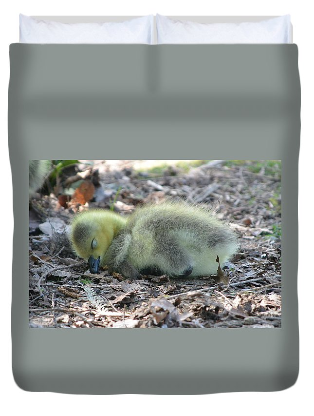 Gosling Duvet Cover featuring the photograph Gosling Napping by Nicki Bennett