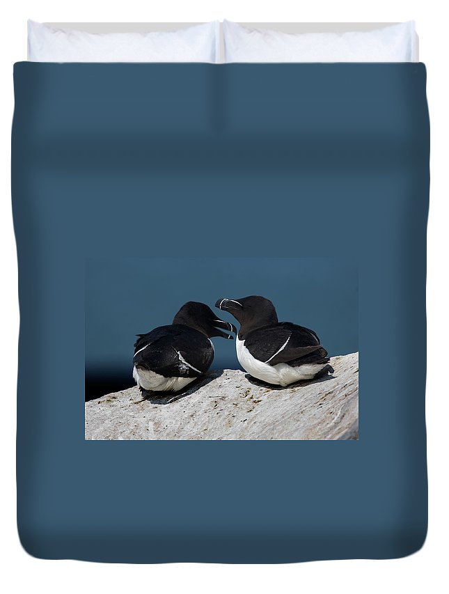 Razorbill Duvet Cover featuring the photograph Gossip Mongers by Brent L Ander