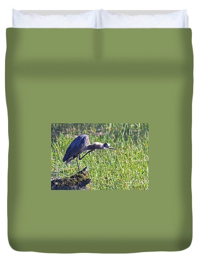 Great Blue Heron Duvet Cover featuring the photograph Got An Itch 4 by Sharon Talson