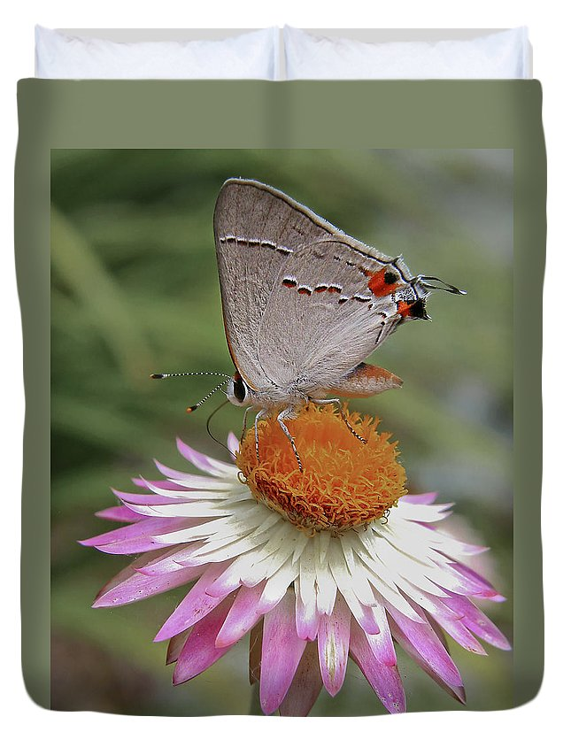 Bloom Duvet Cover featuring the photograph Gray Hairstreak And Straw Flower by David and Carol Kelly