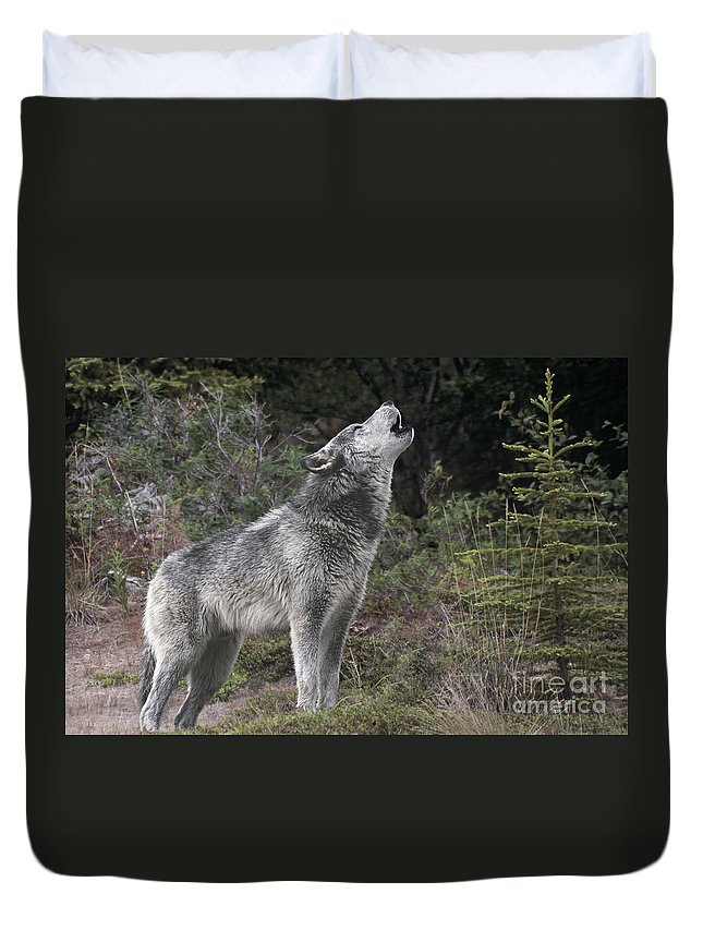 Gray Wolf Duvet Cover featuring the photograph Gray Wolf Howling Endangered Species Wildlife Rescue by Dave Welling