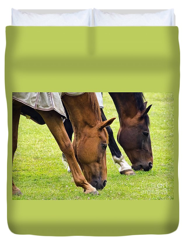 Ferne Animal Sanctuary Duvet Cover featuring the photograph Grazing In Sync by Susie Peek