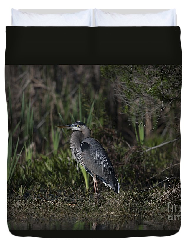 Great Blue Heron Duvet Cover featuring the photograph Great Blue Heron by Dale Powell