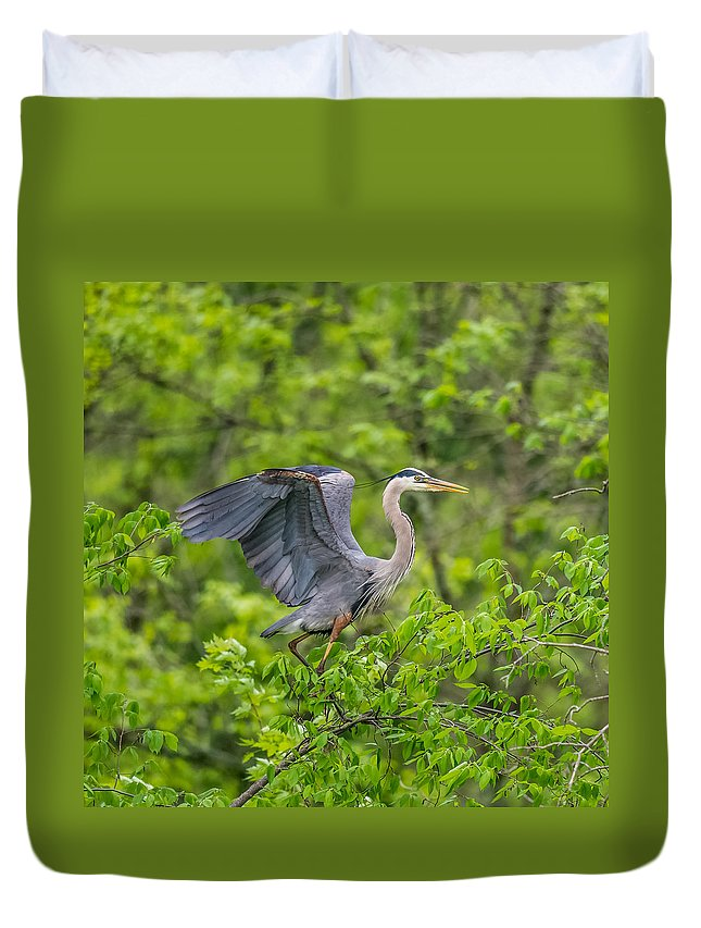 Wildlife Duvet Cover featuring the photograph Great Blue Heron Landing by Paul Freidlund