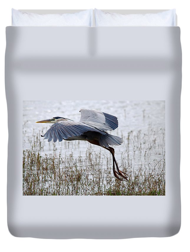 Roy Williams Duvet Cover featuring the photograph Great Blue Heron Landing Series 3 by Roy Williams