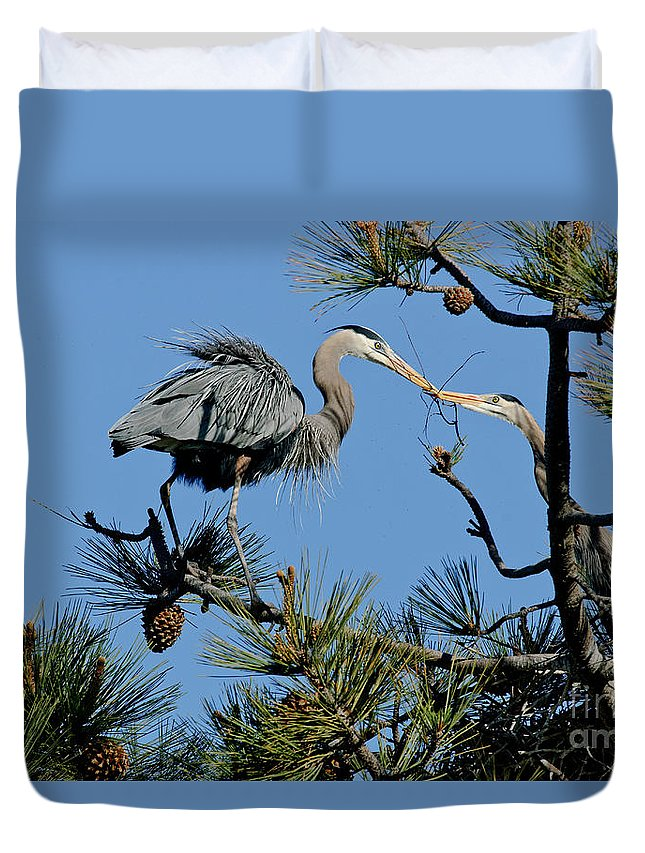 Nature Duvet Cover featuring the photograph Great Blue Heron With Nest Material by Anthony Mercieca