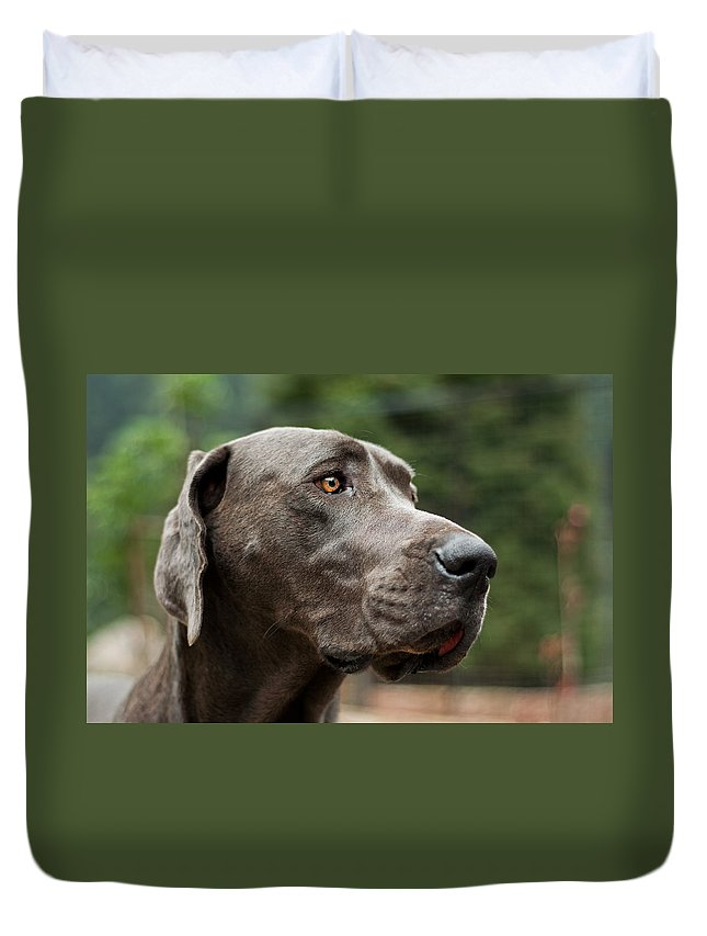 Great Duvet Cover featuring the photograph Great Dane by Jess Kraft
