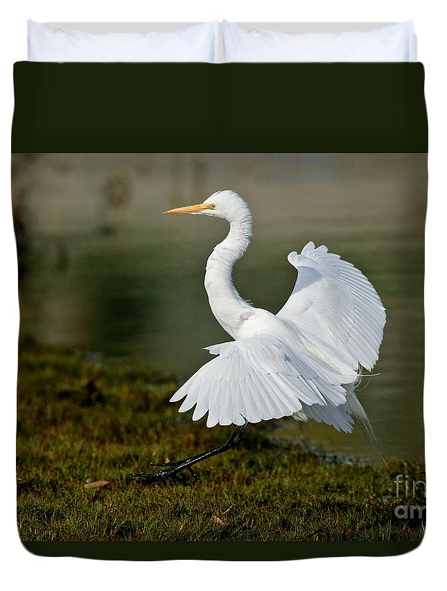 Fauna Duvet Cover featuring the photograph Great Egret Alighting by Anthony Mercieca