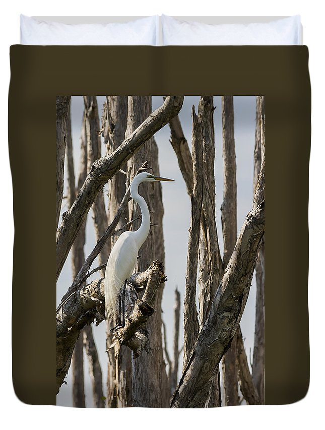Great Egret Duvet Cover featuring the photograph Great Egret by Ed Gleichman