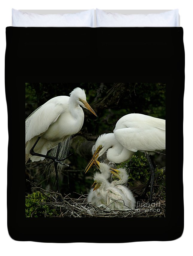 Great Egret Family Duvet Cover featuring the photograph Great Egret Family 2 by Bob Christopher