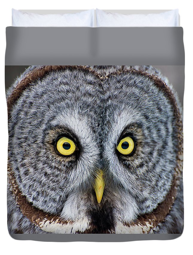 Animal Themes Duvet Cover featuring the photograph Great Gray Owl by Copyright Michael Cummings