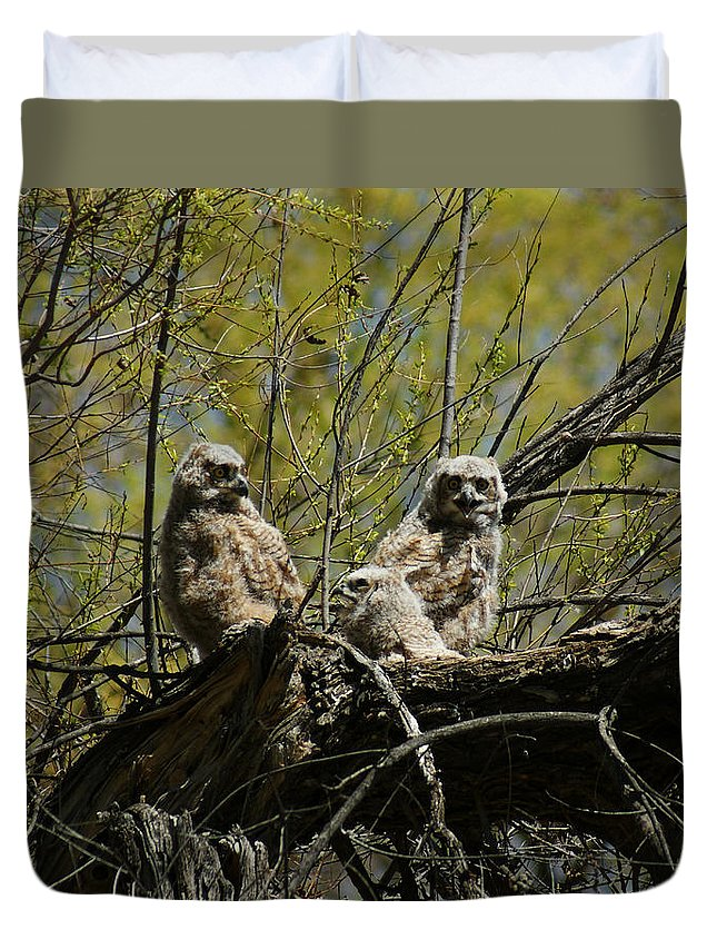 Birds Duvet Cover featuring the photograph Great Horned Owlets 1 by Ernie Echols