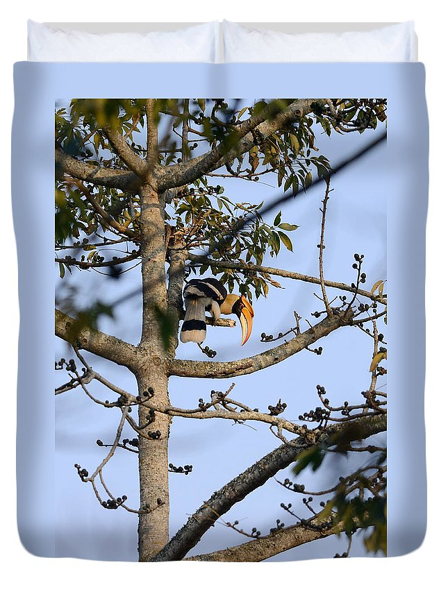 Nature Duvet Cover featuring the photograph Great Indian Hornbill by Fotosas Photography