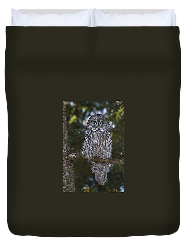 Great Grey Owl Duvet Cover featuring the photograph Great Owl Eyes by Joshua McCullough