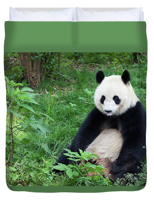 Chinese Culture Duvet Cover featuring the photograph Great Panda Showing Its Tongue - by Fototrav