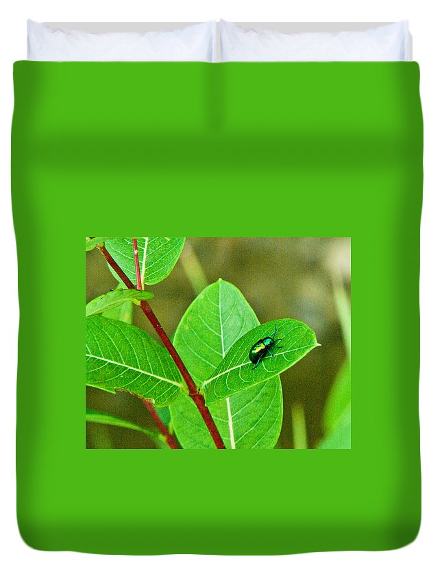 Beetle Green Duvet Cover featuring the photograph Green Beetle Foraging by Douglas Barnett