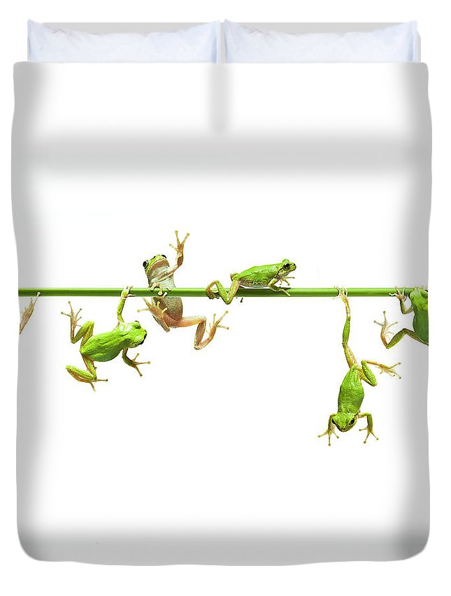 Hanging Duvet Cover featuring the photograph Green Flogs Each Other Freely On Stem by Yuji Sakai