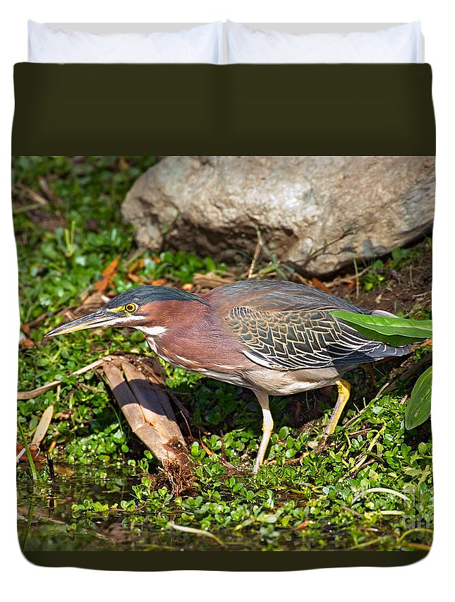 Fauna Duvet Cover featuring the photograph Green Heron by Anthony Mercieca