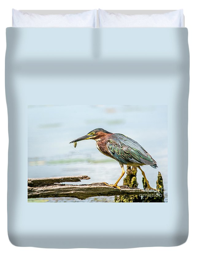 Green Feathers Duvet Cover featuring the photograph Green Heron Perfection by Cheryl Baxter