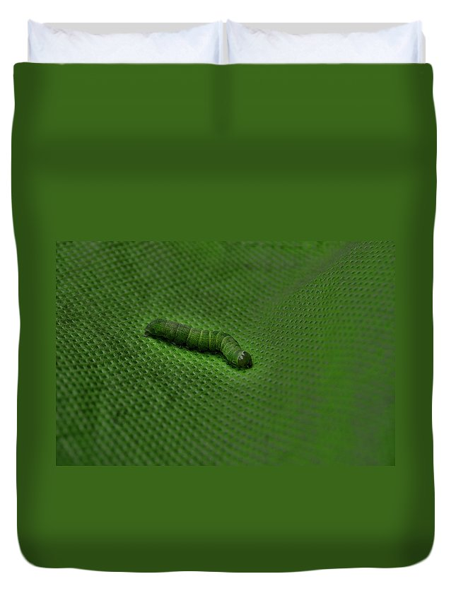 Inch Worm Duvet Cover featuring the photograph Green Inch by Jes Fritze