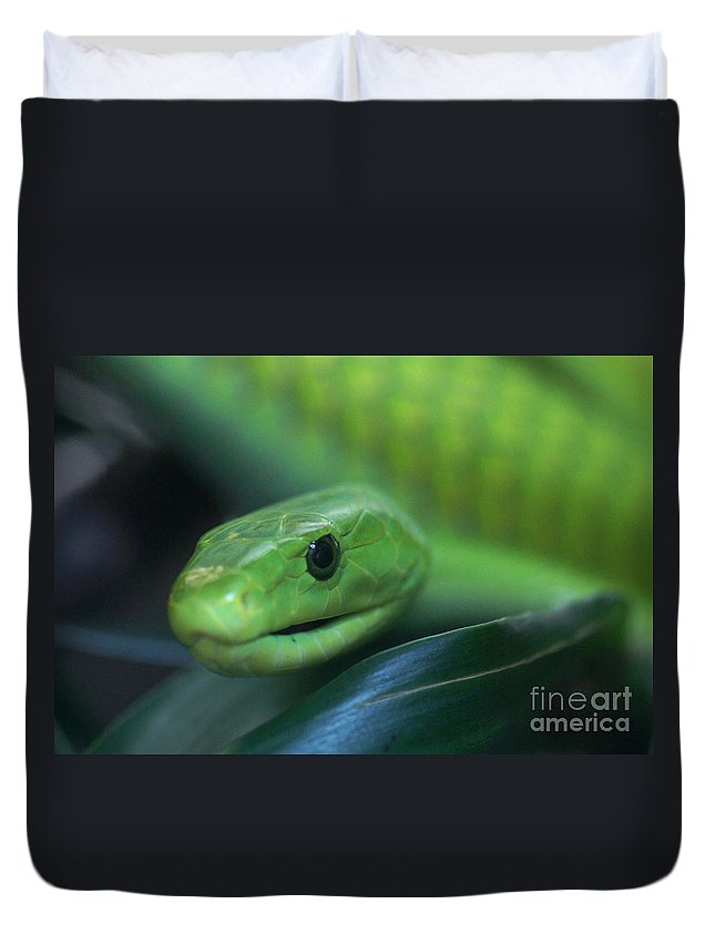 Nature Duvet Cover featuring the photograph Green Mamba 2 by Rudi Prott