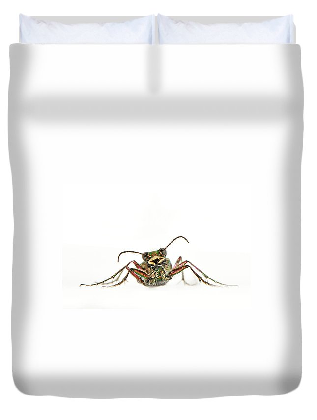 White Background Duvet Cover featuring the photograph Green Tiger Beetle by Robert Trevis-smith