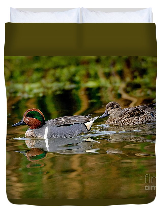 Fauna Duvet Cover featuring the photograph Green-winged Teal Pair by Anthony Mercieca