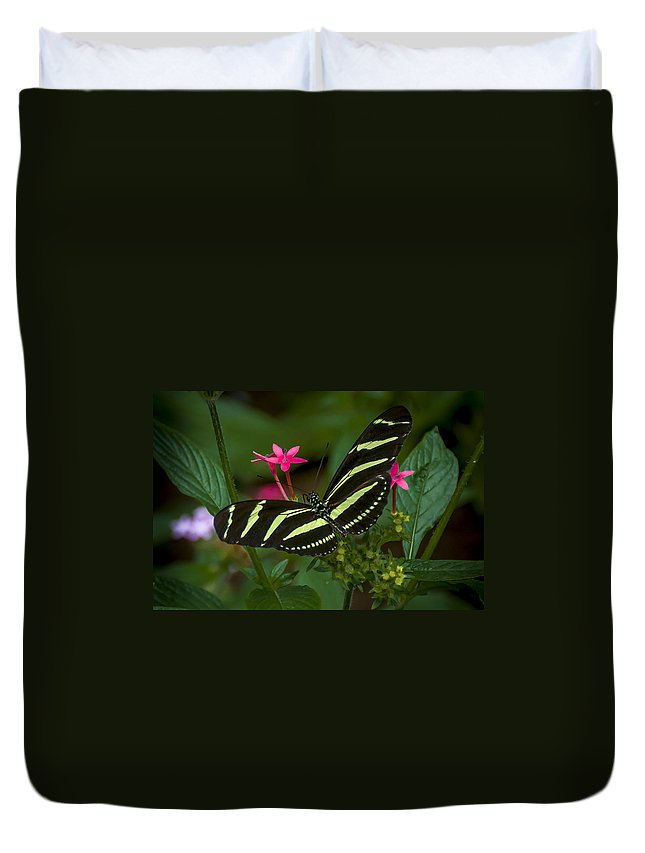 Butterfly Duvet Cover featuring the photograph Green Without Envy by Louis Rivera