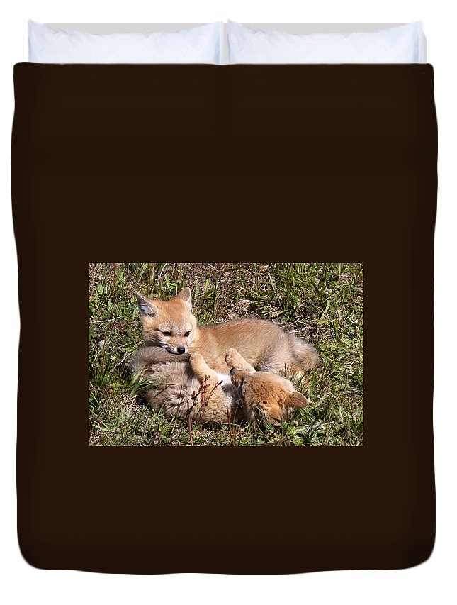 Chile Duvet Cover featuring the photograph Grey Fox Kitts At Play by David Beebe