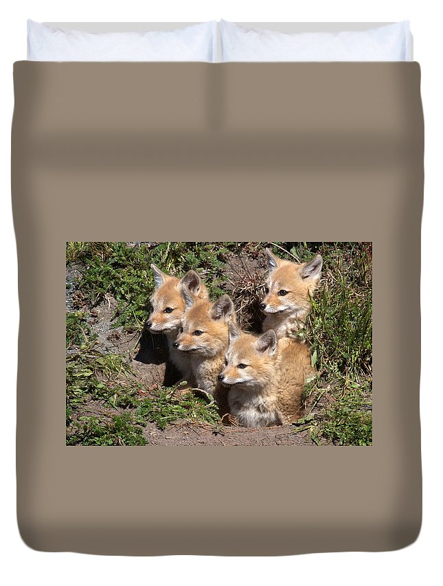 Chile Duvet Cover featuring the photograph Grey Foxes At Den by David Beebe