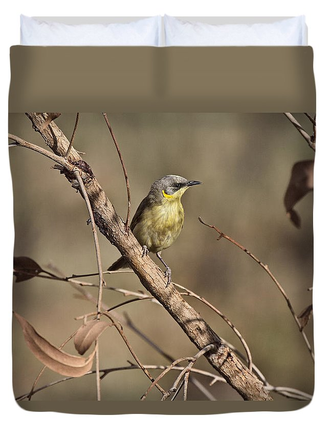 Grey-headed Honeyeater Duvet Cover featuring the photograph Grey- Headed Honeyeater by Douglas Barnard