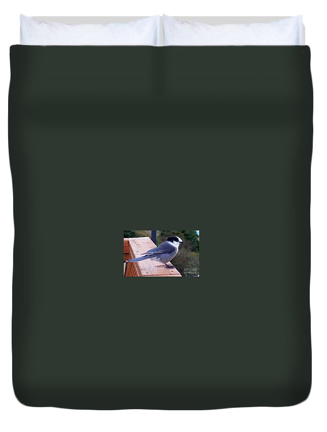 Grey Jay Duvet Cover featuring the photograph Grey Jay On A Rail by Barbara Griffin