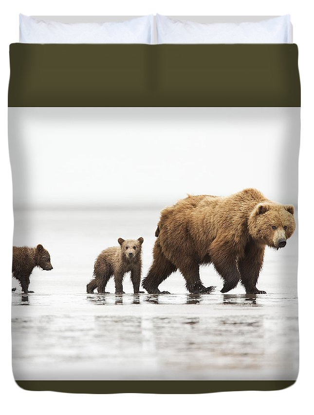 Richard Garvey-williams Duvet Cover featuring the photograph Grizzly Bear Mother And Cubs Lake Clark by Richard Garvey-Williams