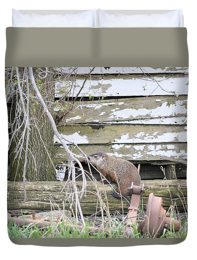 Groundhog Duvet Cover featuring the photograph Ground Hog Day by Bonfire Photography